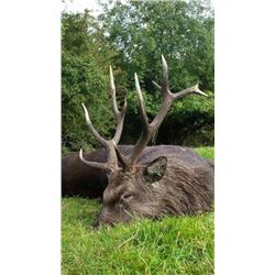 IRELAND | One Hunter and One Non-hunter | Includes Trophy Fee