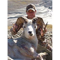 Alaska Dall Sheep hunt with Mike Colpo/Alaska Master Guide #194