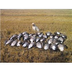 Three Day Goose and Duck Hunt in Canada for One Hunter