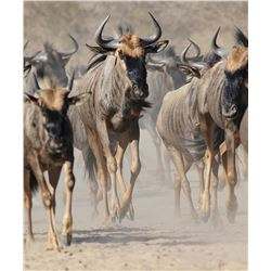 Eight Day Eastern Cape South Africa Custom Plains Game Hunt for Four Hunters