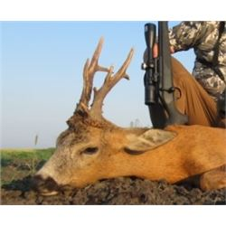 Serbia Roe Deer hunt for two hunter - includes one roe deer.