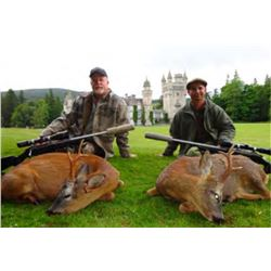 Scotland Roe Deer hunt for One Hunter Two Roe deer included!