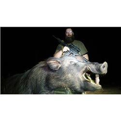 One Night Hog Hunting in Georgia for One Hunter