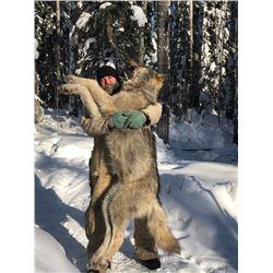 Ultimate Predator Hunt - Canadian Wolf & Coyote Hunt