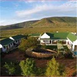Springbok Grand Slam Split Between 2 Hunters with Royal Karoo Safaris
