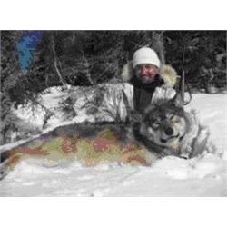 Wolf Hunt with Kap Rivers Outfitters
