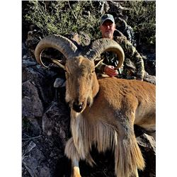 Free Range Aoudad Hunt for 1 hunter in Marfa, TX