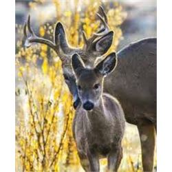 6 Day Whitetail Deer Hunt for One Hunter