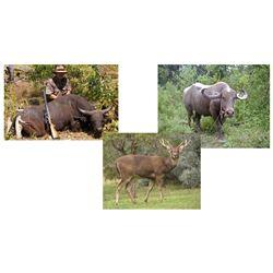 $9000 Credit toward any Hunt – Buffalo, Bantang, Rusa Deer