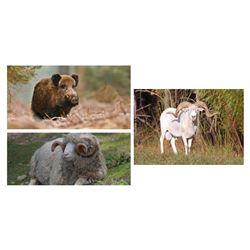 7 Day Texas Dall Ram, Wild Boar, Hybrid Sheep Each for Two Hunters
