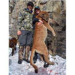 5 Day Female Mountain Lion for One Hunter