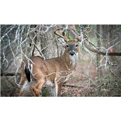 """4 Day/3 Night Whitetail Deer 140 - 149"""" for One Hunter and One Non-Hunter"""