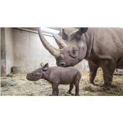 Behind the Scenes Rhino Experience including Baby Jaali