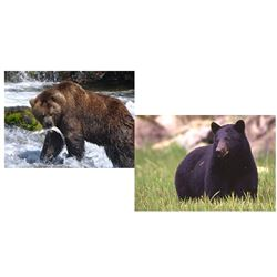10 Day Grizzly & Black Bear Combo Hunt for One Hunter
