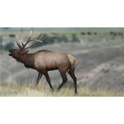5 Day Roosevelt Elk 2 on 1 Hunt for Two Hunters