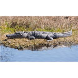 2 Day and 2 Hunters for Alligator and Thermal Hog Hunting Donated by Fox Brow Outfitters