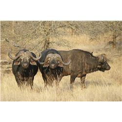 10 Day Mozambique Free Range Cape Buffalo Hunt donated by Legadema Safaris