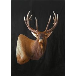 $500 Taxidermy Gift Certificate Donated by Two Rivers Taxidermy