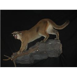5 Day South Africa Safari  Includes $500 in taxidermy credit per hunter Donated by Dakota Plains Tax