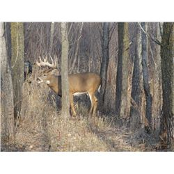 3 day whitetail hunt up to 200 inch, includes meals, lodging Donated By Crow River Whitetails