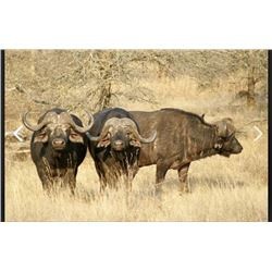 7 Day Plains Game Hunt in South Africa for 2-4 Hunters and Non-Hunters.  Includes Trophy Fees for 1