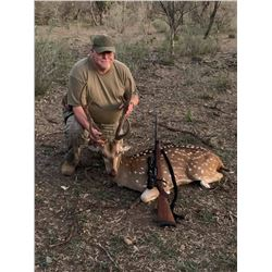 2 Day Texas Axis Deer, Blackbuck or Aoudad Hunt for One Hunter