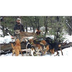 Arizona:7 Day Guaranteed Mountain Lion Hunt for 1 Hunter on the Famed Arizona Strip