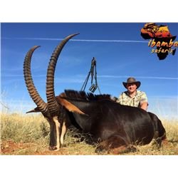 South Africa: 7 Day Sable bull Hunt for One Hunter / Includes $3,000 Trophy Fee Credit