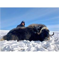 Northwest Territories – 6 Day – Musk Ox Hunt for One Hunter