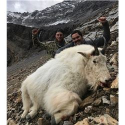 10 Day – Mountain Goat Hunt for One Hunter