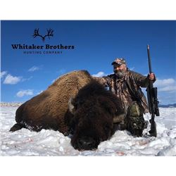 Colorado – 2 Day- American Bison Hunt for One Hunter