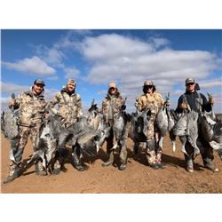 3 Day Texas Crane Hunt For 2