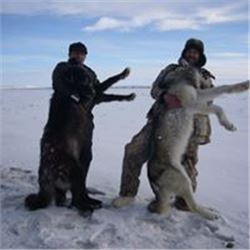 7 Day Alaska Wolf and Predator Hunt