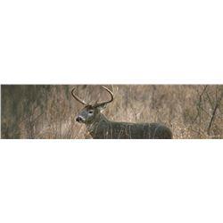 Iowa Non-Resident Whitetail Tag
