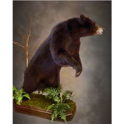 Taxidermy Credit from Nature's Best Wildlife Artistry