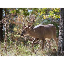 West Virginia Whitetail Deer Hunt