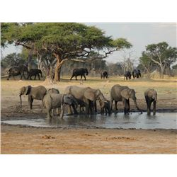 Five-Day Non-Exportable Elephant Hunt in Zimbabwe