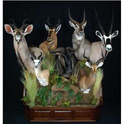$1,500 Taxidermy Credit for Reflections of the Wild