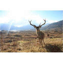 SPAIN - 3 DAY HUNT FOR TROPHY IBERIAN RED STAG FOR ONE HUNTER