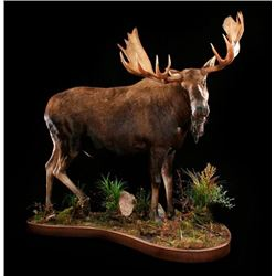$500 GIFT CERTIFICATE FOR TAXIDERMY/CUSTOM WOOD WORK