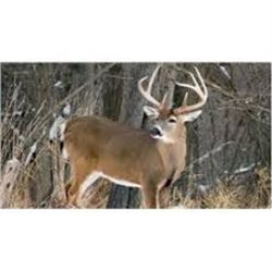 SE MICHIGAN – SEVEN DAYS WHITETAIL DEER HUNTING FOR ONE HUNTER