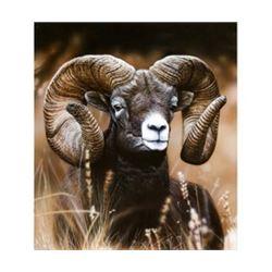 """FRAMED WILDLIFE ART """"MOUNTAIN RAM"""""""