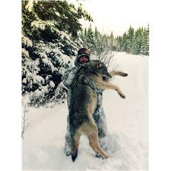 Ontario Wolf Hunt - $2,500