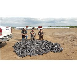 Argentina Eared Dove Hunt for 6 Hunters - $13,000