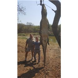 South African Crocodile for 1 Hunter - $20,000