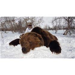Kamchatka Brown Bear - $13,900 / Exhibitor