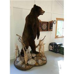 Life-size Alaskan Brown Bear with Habitat - $5,000 / Exhibitor