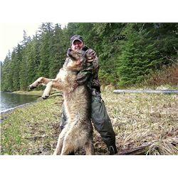 Kuiu Island Black Bear/Wolf Hunt for 1 Hunter - $7,500