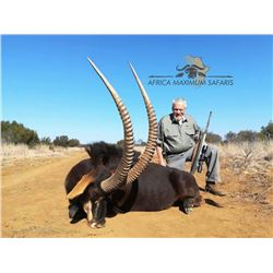 South Africa Golden Wildebeest, Blue Wildebeest, Zebra and Impala for 2 Hunters and 2 Non-Hunters -