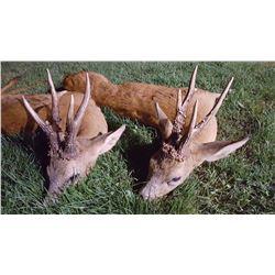 Roe Buck Hunt in France for 1 Hunter- 3800 Euros
